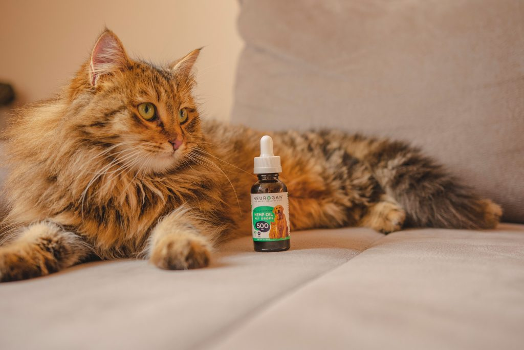 Best CBD products, which are beneficila for the health of the cats