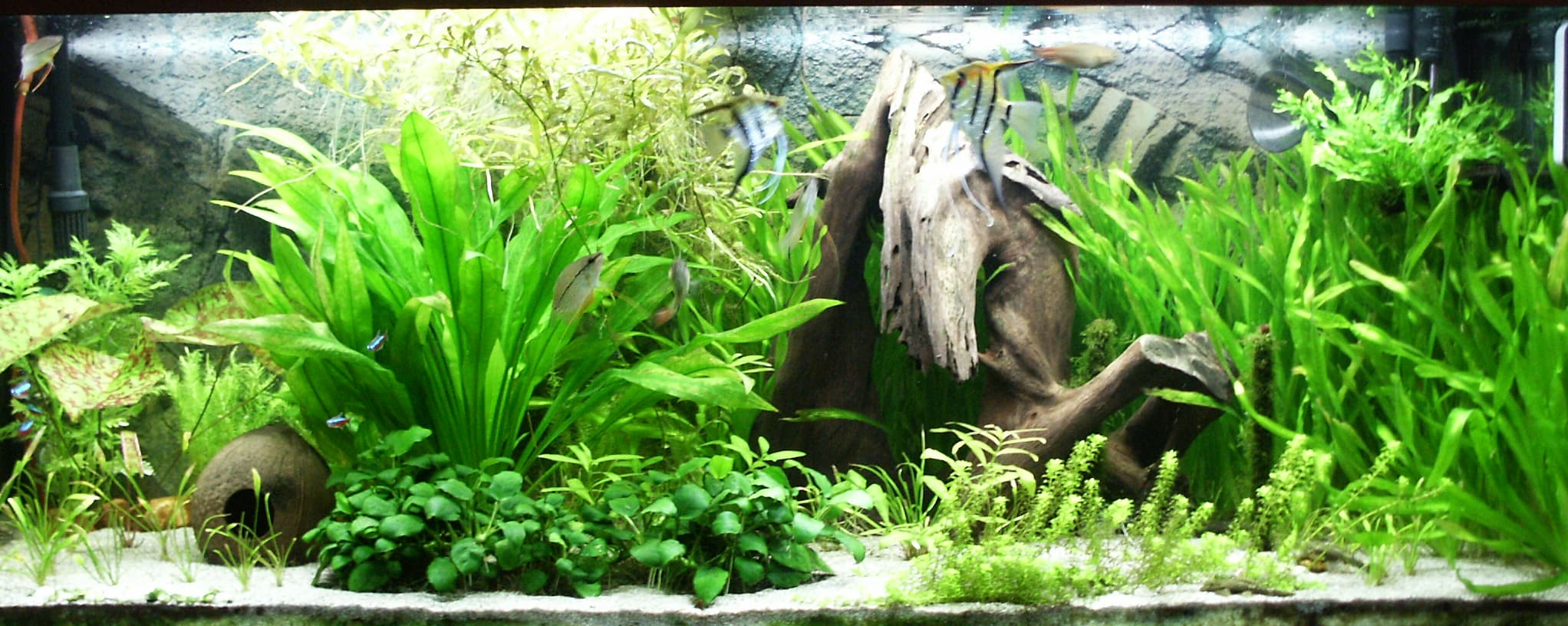 Treating Out the basic needs for an aquarium;