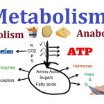 Some Important Facts About Anabolism – Know About The Facts